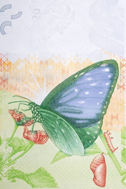 Swallowtail butterfly on the flower from hong kong money Premium Photo