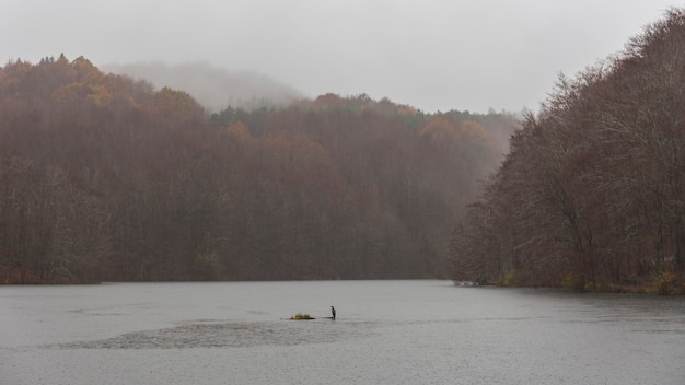 Swamp of santa fe in a raining day with a great cormorant in the midle Premium Photo