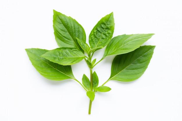 Sweet basil leaves on white. Premium Photo