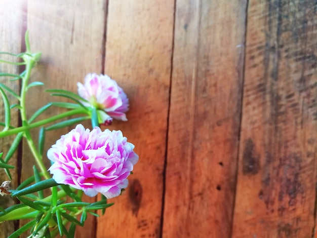 Sweet pink moss rose flowers are beautiful decoration on wooden sweet pink moss rose flowers are beautiful decoration on wooden background premium photo mightylinksfo
