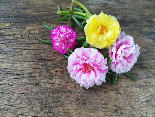 Premium Photo Sweet Pink And Yellow Moss Rose Flower Are Beautiful On Wooden Background