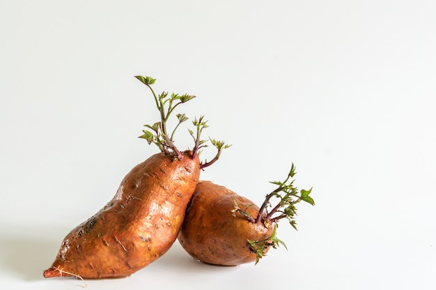 Sweet potatoes with growing plants Free Photo
