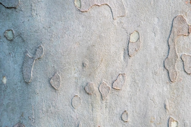 Sycamore platan or plane tree bark texture  khaki military pattern imitation Premium Photo