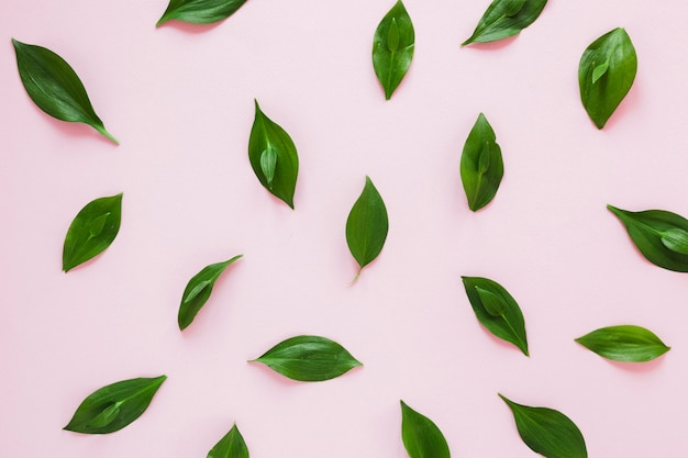 Symmetrical flat lay composition of leaves Free Photo