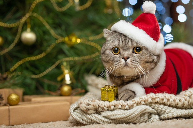 ぶちと幸せな猫。 Premium写真