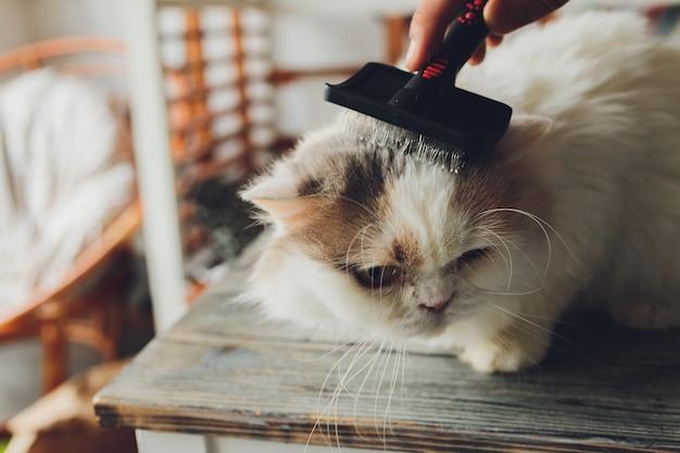 猫の美容院のテーブルに横になっているぶち猫。セレクティブフォーカス。 Premium写真
