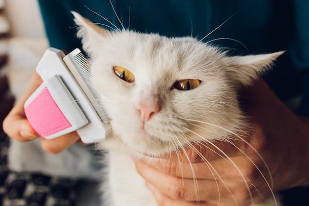 猫の美容院のテーブルに横になっているぶち猫。 Premium写真