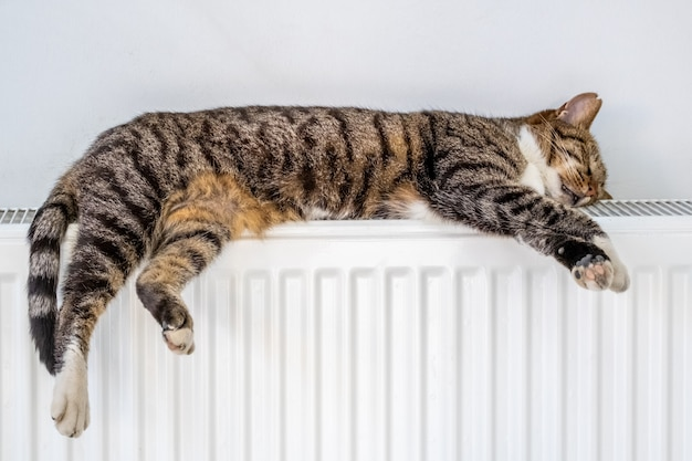 Tabby cat lying on a warm radiator by the wall Premium Photo