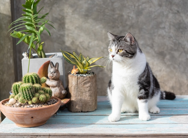 Tabby cat  sit on blue wooden table with a cactus in greeny clay pot Premium Photo