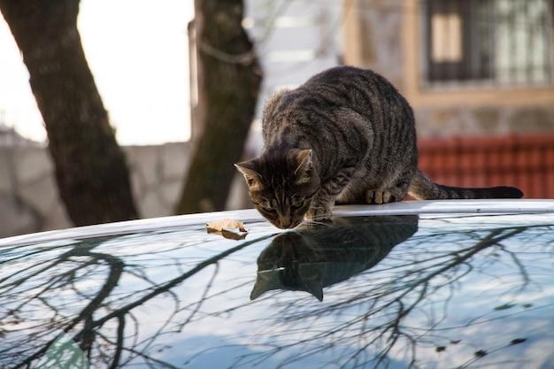 屋外で反射するガラスの表面に座っているぶち猫 無料写真