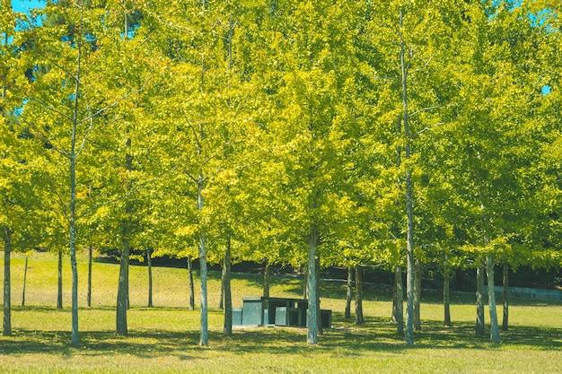 Стол со стульями спрятан под деревьями Бесплатные Фотографии