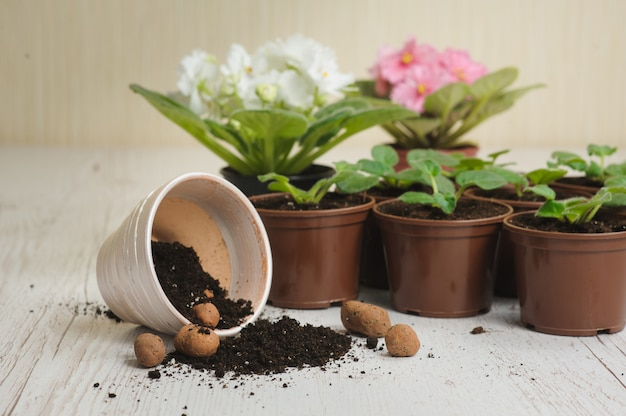 Table with flower pots, potting soil and plants Premium Photo