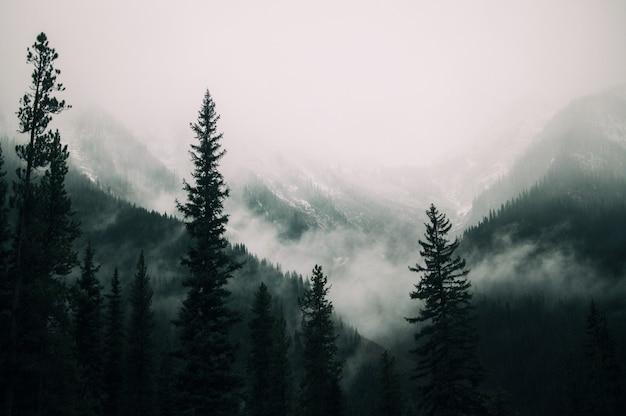 안개로 덮여 산의 숲에 키 큰 나무 무료 사진