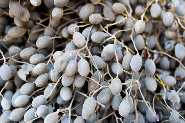 Tamarind fruit Premium Photo