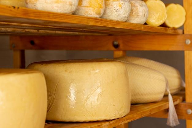 Tasty matured cheese wheels Free Photo