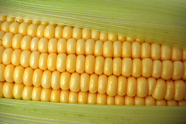 Tasty ripe corn Premium Photo