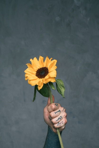 Tattooed man's hand holding sunflower against grey backdrop Free Photo