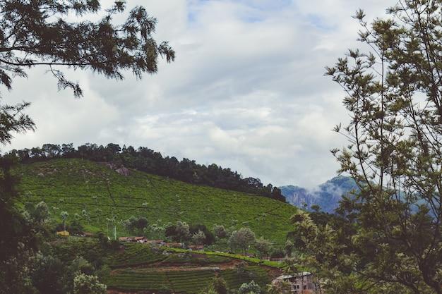 Tea gardens Free Photo