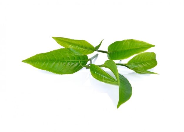 Tea leaf isolated Premium Photo