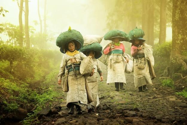 Tea picking farmers go home after the farm Premium Photo