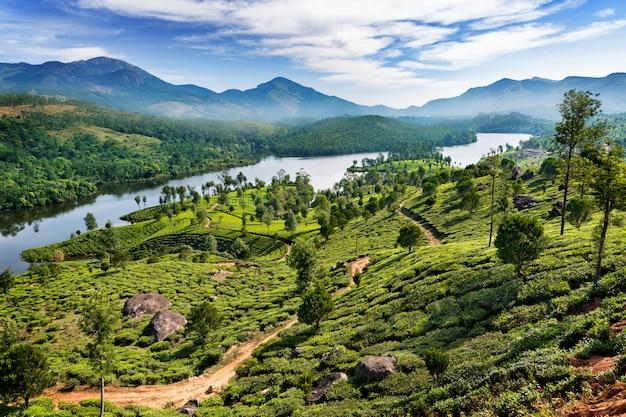 Tea plantation in india Premium Photo