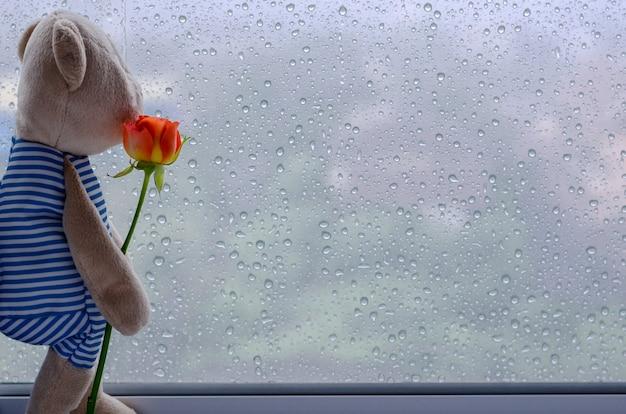 Мишка стоит у окна, держа розу и глядя из окна. Premium Фотографии