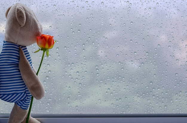Teddy bear stands at window holding rose and looking out from the window. Premium Photo