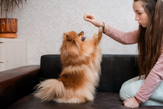 Teenage girl with a dog breed spitz rejoices with a pet at home on the floor. Premium Photo
