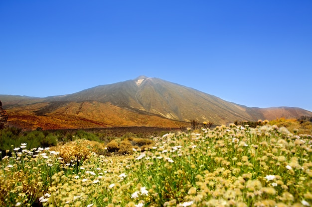 Teide national park mountain in tenerife Premium Photo