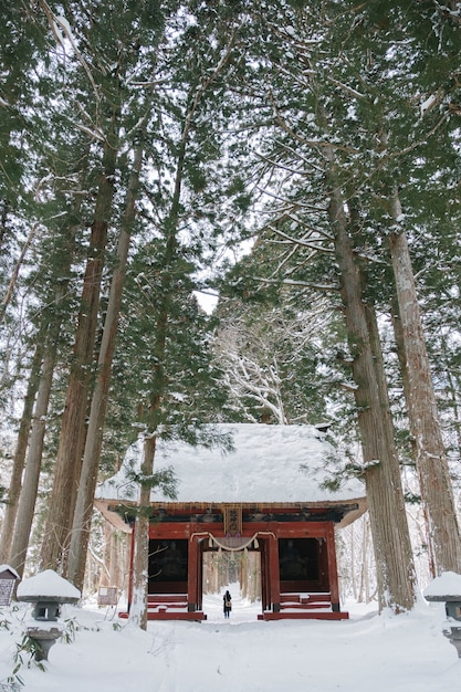 Temple in snow forest at togakushi shrine, japan Free Photo