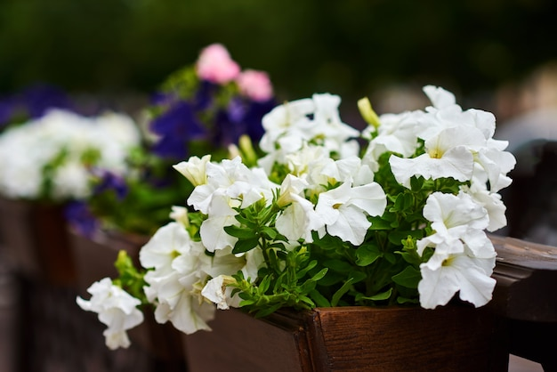 Terrace cafe decorates with a white flowers, close up Premium Photo