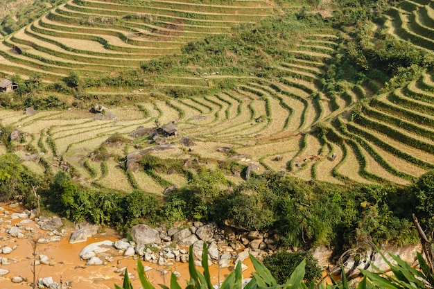 Terraced rice field landscape near sapa in vietnam Premium Photo