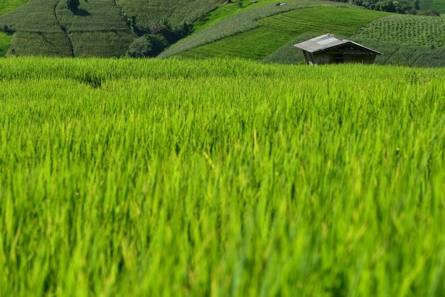 Terraced rice field on mountain, pa pong piang village, chiang mai province, northern of thailand Premium Photo