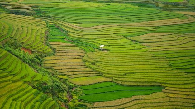 Terraced rice field in mu cang chai, vietnam Premium Photo