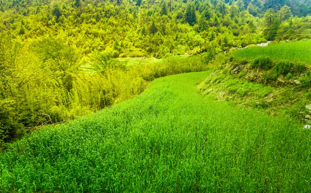 Terraced rice field Premium Photo
