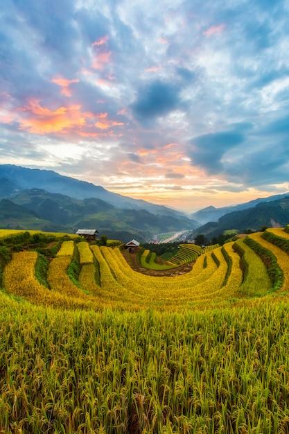 Terraced rice paddy field landscape of mu cang chai Premium Photo