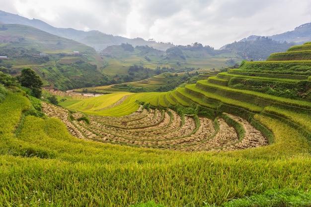 Террасный пейзаж рисовых полей му канг чай, йенбай, северный вьетнам Premium Фотографии