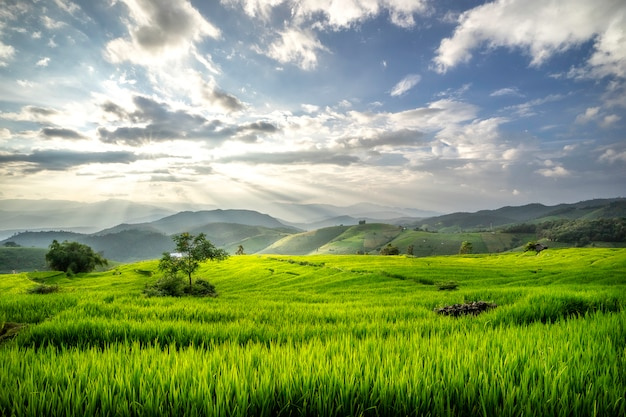 Terraces rice fields on mountain in thailand Premium Photo