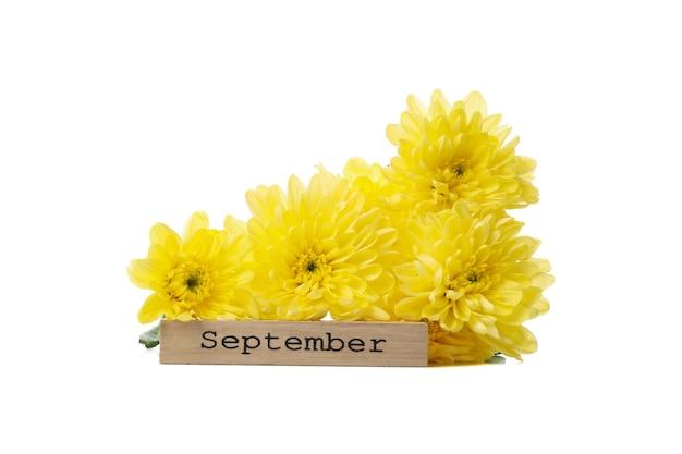 Сентябрь текст и цветы, изолированные на белом фоне Premium Фотографии