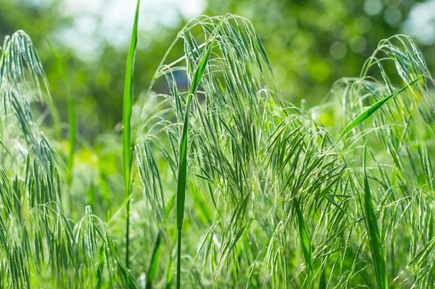 Текстура фон зеленая трава Premium Фотографии