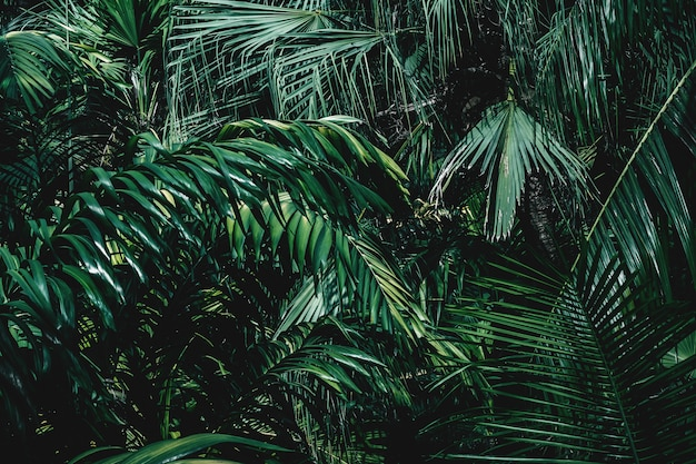 Texture and background of tropical plants Premium Photo