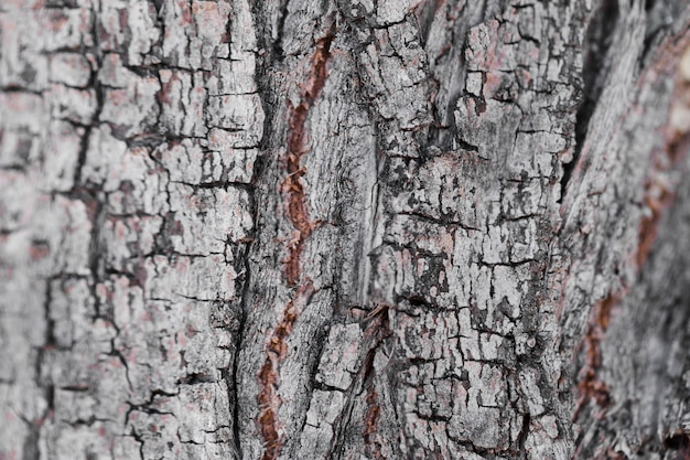 Texture of close up wood Free Photo