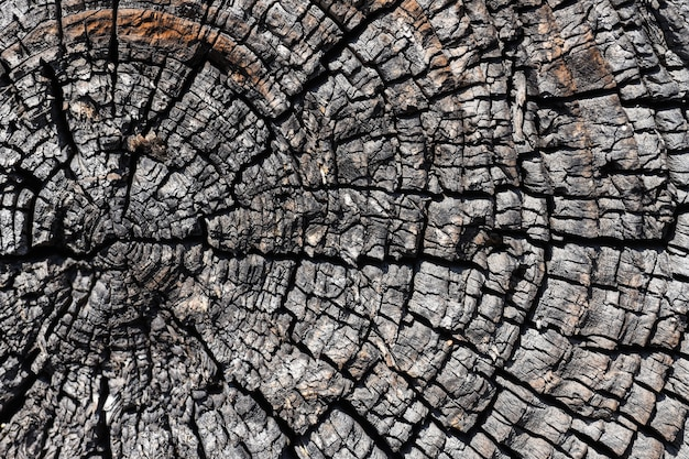 Texture of a cut of a dried tree trunk close-up Premium Photo
