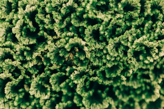 Texture of green plants background Free Photo