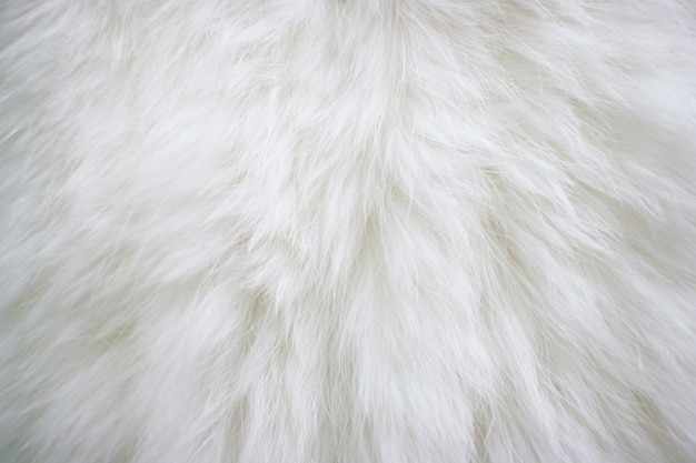 Texture of natural long-haired white fur. Premium Photo