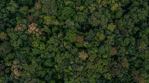 森の背景のテクスチャ Premium写真