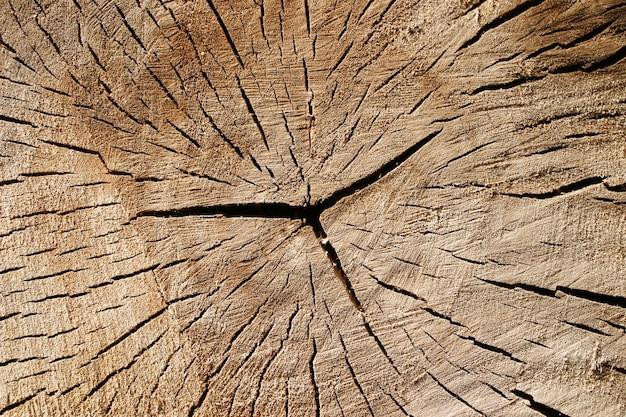 Texture of the old stump Premium Photo