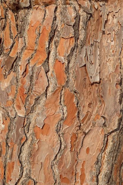 Texture pine tree bark, detailed shot. Premium Photo