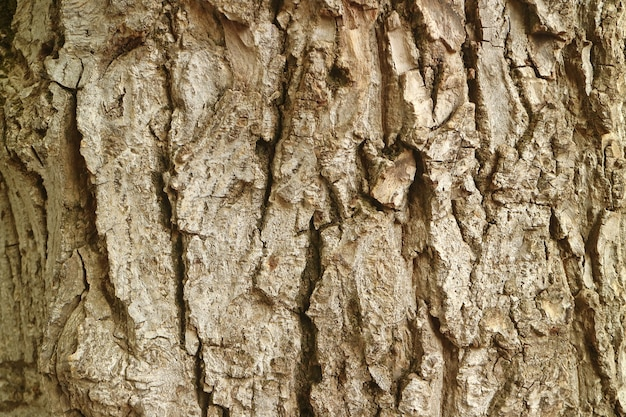 Texture of rough tree bark for background Premium Photo