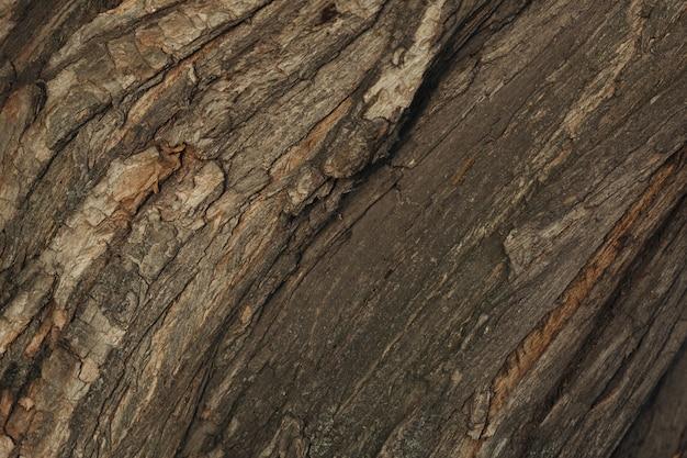 Texture of tree bark close up Premium Photo